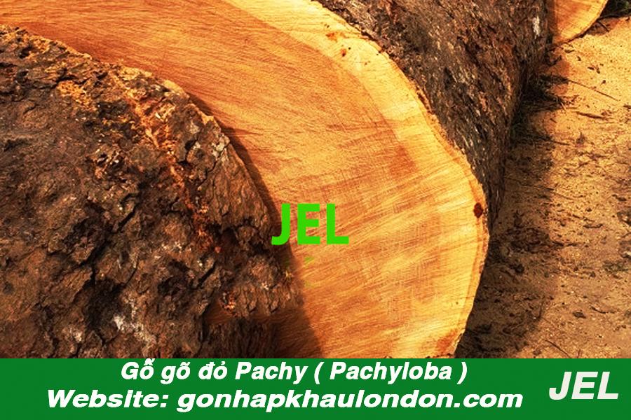 gỗ gõ đỏ pachyloba 1